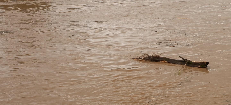 Moselhochwasser mit Treibgut